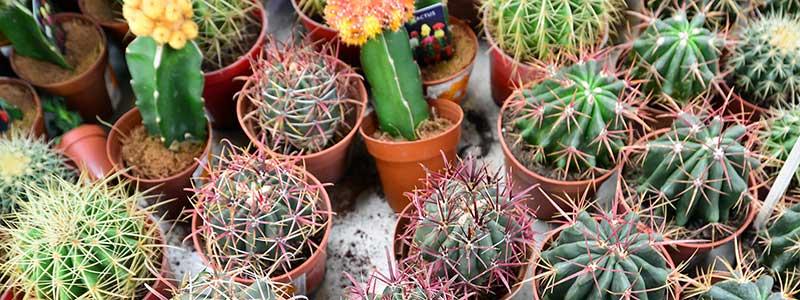 conservatory-plants-1